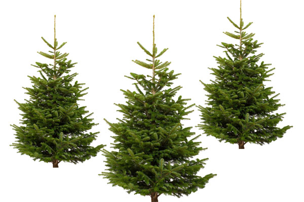 Kerstbomen-v2